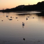 I&#039;m being artsy-fartsy with some swans